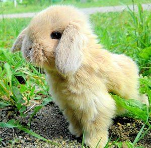 子ウサギがやってきました!