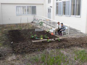 中庭に野菜の苗を植えました~♪