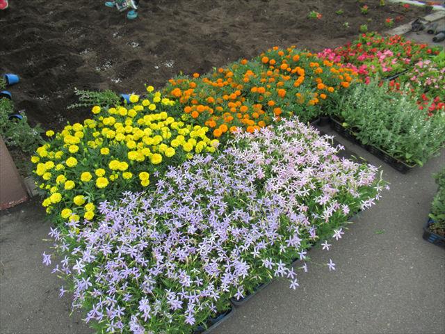 施設の美化活動°˖✧◝(⁰▿⁰)◜✧˖°お花がいっぱい